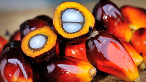 STOP con el aceite de palma