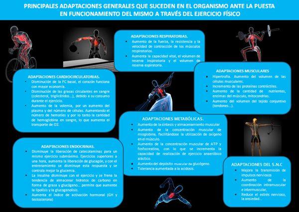 Adaptaciones generales del organismo a través del ejercicio físico